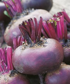 beetroot d'egypte seeds production