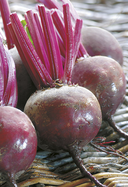 beetroot early wonder seeds production