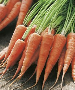 carrot kuroda seeds production