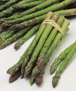 asparagus mary washington seeds production