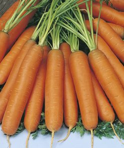 carrot nantes 2 seeds production