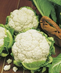cauliflower primus seeds production